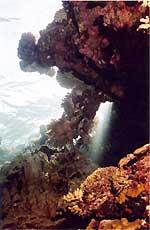 Corail et lumière